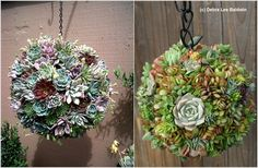 Keep reading to learn how to make succulent balls and adorn your garden or any indoor space with these amazing little decos! Hanging Plants Outdoor, Plants For Hanging Baskets, Hanging Succulents, Wire Baskets, Succulent Wall, Succulent Gardening, Succulent Terrarium, Small Gardens, Outdoor Gardens