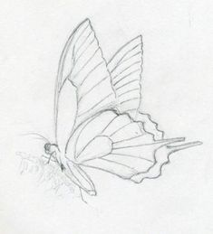 make butterfly sketch quickly and easily. speed is the key - simple butterfly sketch Key Drawings, Art Drawings Sketches, Animal Drawings, Pencil Drawings, Easy Sketches To Draw, Animal Sketches Easy, Simple Sketches, Quick Sketch, Easy Butterfly Drawing