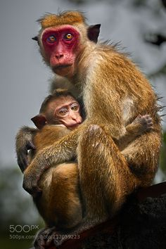 monkeys in the rain by PerttiS. Please Like http://fb.me/go4photos and Follow @go4fotos Thank You. :-)