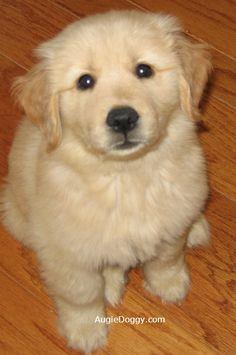 Puppy Augie, 2006