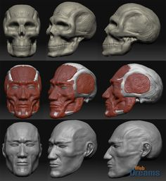 Modeling a human head in multiple layers.