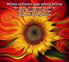Millions of slowers open without forcing the buds.  It reminds us not to force anything for things happen in the right time....