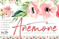 Anemone - Illustrations