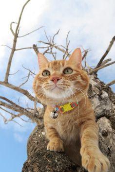 A cat owner's need to purchase a cat collar for their furry pets often for 2 reasons.First, use and acts as a way of showing ownership and second being a form of decoration for their pets. Other reason of wearing a collar maybe simply to let people know that the cat is owned.   #breakaway collar #cat's collar #safety collar