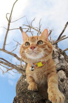きのうえのとら - かご猫 Blog