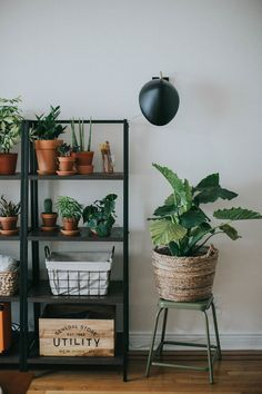 You can't go wrong with plants. They go with modern, minimal, rustic and boho home decor. They're a cheap and easy way to transform a room.