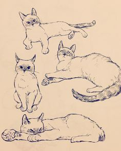 Pin by badassbookneko on cats (and other animals) in 2019 ри Animal Sketches, Art Drawings Sketches, Realistic Drawings, Illustration Sketches, Animal Drawings, Drawing Art, Cute Cat Drawing, Cat Illustrations, Horse Drawings