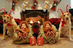 Adorable Babies Dressed as Gingerbread Men and the poor dog omg I love this too much