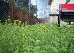Protect Your Organic Garden: 5 Ways To Get Rid Of Weeds, Naturally