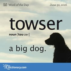 Today's Word of the Day is towser. Learn its definition, pronunciation, etymology and more. Join over 19 million fans who boost their vocabulary every day.