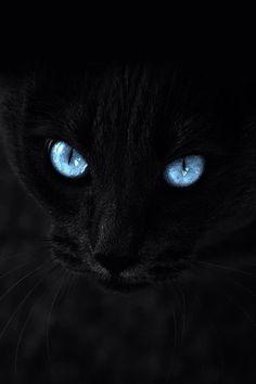 Risultati immagini per gatos negros y ojos azules Iphone Wallpaper Cat, Cute Cat Wallpaper, Warrior Cats, Preto Wallpaper, Galaxy Cat, Cute Kittens, Blue Eyes, Cute Animals, Funny Animals