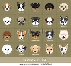 Set of Dogs Vector Illustration. 20 Puppy