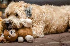 Jessie usinhg her teddy as a pillow