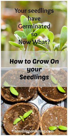 How to Grow On your Seedlings with Sensible Gardening