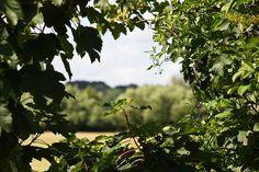 Hazey view through the hedge by Nitibob, via Flickr