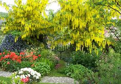cottage garden plants for shade - Cottage Garden Plants and some ...