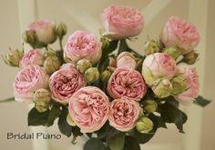 Beau Bridal Piano Roses