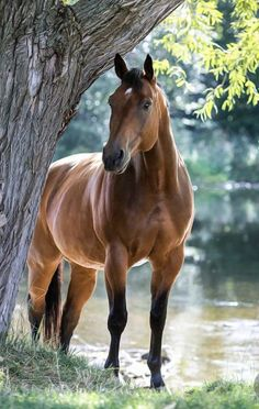Horse Pictures, Funny Animal Pictures, Funny Photos, Celine, Funny Cats, Funny Animals, Farm Animals, House Funny, Pre Wedding Photoshoot