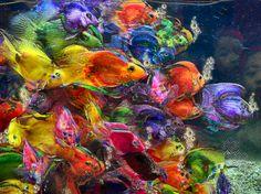 Fish Aquarium.   Artist:E Giupponi