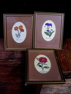 Cash's Silk Picture - Vintage Silk - Botanical Picture - Benjamin Maund - Embroidered Picture - Woven Picture - Floral Picture - English by MissieMooVintageRoom on Etsy