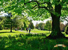 Ireland, Golf Courses, Digital Art, Castle, Park, City, Castles, Parks, Cities
