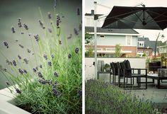 141 beste afbeeldingen van tuinontwerp tuinaanleg moderne tuinen