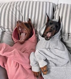 Perro Doberman Pinscher, Doberman Dogs, Dachshund Puppies, Cute Dogs And Puppies, Dobermans, Doggies, Scary Dogs, Funny Dogs, Animals And Pets