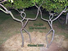 trees - Artful determination in tree sculpting