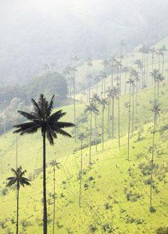 Colombia - Valle de Cocora.