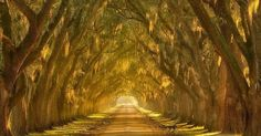 20 Mystical Tree Tunnels That You Would Want To Walk. http://timewheel.net/Image-20-Mystical-Tree-Tunnels-That-You-Would-Want-To-Walk-Through