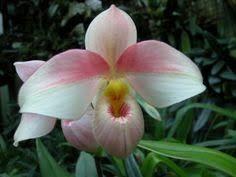 Resultado de imagen para flores exóticas blancas