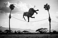 Hakuna Matata - The 'Hakuna Matata' series by french photographer Thomas Subtil captures animals at their most playful. Hakuna Matata takes animals nat. Hakuna Matata, Surrealism Photography, Art Photography, Kenya, The Lion King, African Animals, Photomontage, Photo Manipulation, Pop Art