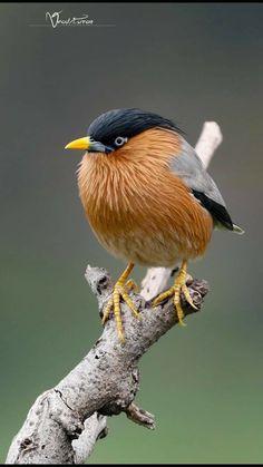 Most Beautiful Birds, Pretty Birds, Wild Animal Wallpaper, Animals And Pets, Cute Animals, Wild Animals Photography, Felt Birds, Bird Pictures, Watercolor Animals
