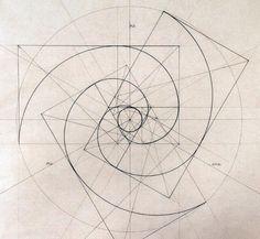 Fibonacci Spirals Rafael Araujo (www.rafael-araujo.com)