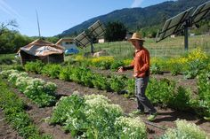 Organic farming is financially-sustainable worldwide, study finds