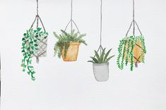 """Hanging plants """"Don't leave me hanging"""""""