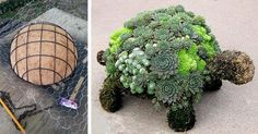 Potrebuje vaša záhradka či balkón trochu života? Doprajte jej aranžmán v tvare korytnačky, ktorá na chrbte nesie rôzne sukulenty. Korytnačka zo sukulentov