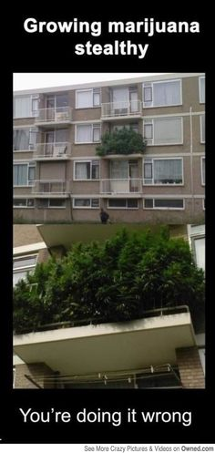 How NOT to grow your weed... -