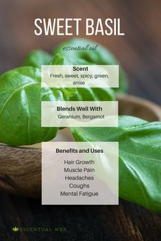 Basil essential oil is a wonderful oil when you are feeling mentally exhausted. It can relax, yet stimulate and clear the mind. Be sure to look for the linalool chemotype. Basil Essential Oil, Essential Oil Safety, Are Essential Oils Safe, Essential Oil Scents, Natural Essential Oils, Essential Oil Diffuser, Aromatherapy Recipes, Healing Herbs