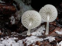 Photographer Captures The Beauty And Diversity Of Australian Fungi - Photographer captures the beautiful diversity of australias fungi