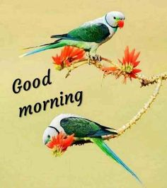 Latest good morning images with flowers ~ WhatsApp DP, Love DP, DP Images, WhatsApp DP For Girls Good Morning Nature, Good Morning Prayer, Cute Good Morning, Good Morning Flowers, Good Morning Messages, Good Morning Greetings, Morning Quotes, Morning Blessings, Good Day Images