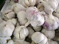 Garlic poultice for fighting viral and bacterial infections