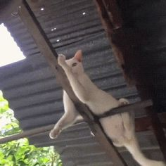 Rafter Cat (Kind of like Ceiling Cat but a Better Sense of Humor)