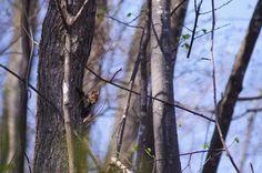 森での出会い : ふつうのコト