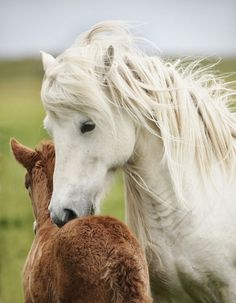 Mother and foal.