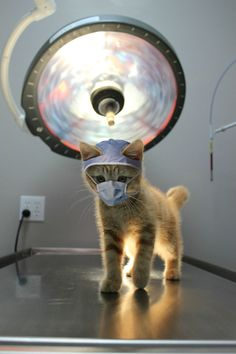 Please spay and neuter!