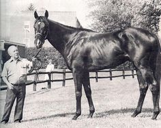J.O. Tobin(1974) Never Bend- Hill Shade By Hillary. Hill Shade Was Bred 5x5 To Selene(Grand Sire Was St. Simon) Who Is Dam Of Hyperion. 21 Starts 12 Wins 2 Seconds 2 Thirds. Champion 2 YO In England In 1976, Co-Champion Sprinter In U.S. In 1978. Famously Known As Horse Who Handed Seattle Slew His First Defeat In The Swaps Stakes In 1977. Did Not Have A Successful Breeding Career.