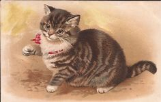 Lovely Tabby Cat Helen Maguire Vintage 1910