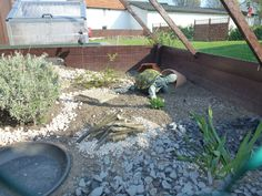 Schildkrötenfreunde Paderborn - News/Bilder