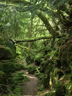 Puzzlewood Forest is an ancient woodland site and tourist attraction, near Coleford in the Forest of Dean, Gloucestershire, England.